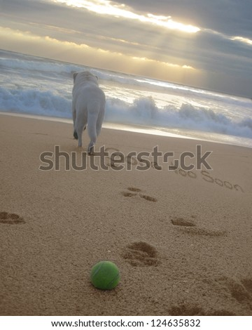 Gone Too Soon handwritten in the sand with image of a dog, paw prints leading to the water & a ball - stock photo