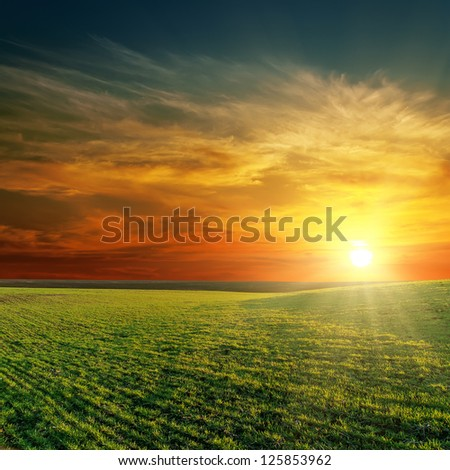 good sunset over green field - stock photo