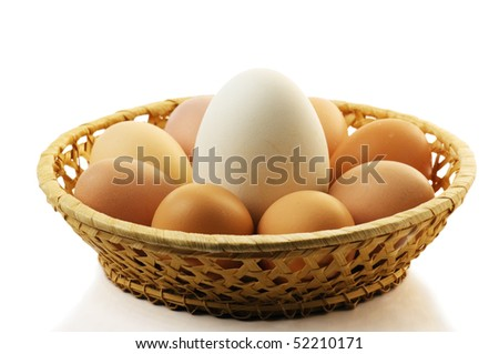 Goose egg and egg is isolated on the white - stock photo