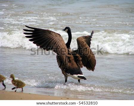 Goose on the Beach - stock photo