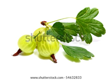 gooseberry with leaves isolated on white background