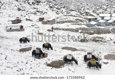 Gorak Shep and yak caravan in case of bad weather - Everest region, Nepal, Himalayas - stock photo