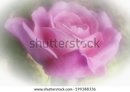 Gorgeous bokeh, shot with a lensbaby optic which which creates the soft ethereal glow and painterly effect but allows sufficient focus of the central rose petals.  - stock photo