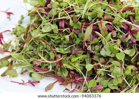 Gorgeous Microgreen Salad - stock photo