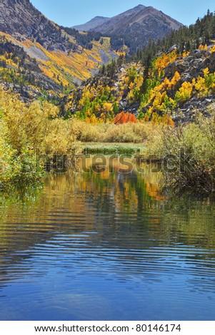 Gorgeous orange bush on the bank of a shallow mountain stream - stock photo