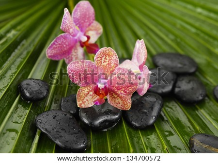 gorgeous orchid with wet spa stones on palm leaf texture - stock photo