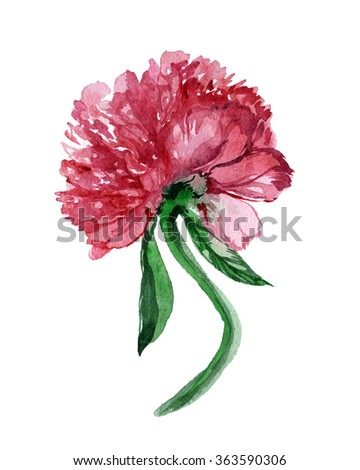 Gorgeous red flower peony. Floral element blossoming lupine leaf for floral design. Realistic watercolor brush painting. Hand drawn illustration leaf and petal of flowers. - stock photo