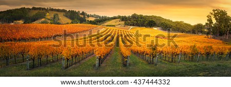 Gorgeous Vineyard in the Adelaide Hills - stock photo