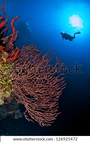 gorgonian sea fan with sunburst and diver - stock photo