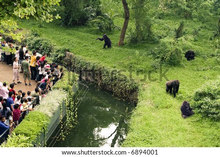 gorillas and attendance in the zoo - stock photo