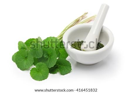 gotu kola, asiatic pennywort, centella asiatica, ayurveda herbal medicine - stock photo