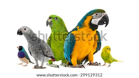 Goup of parrots in front of a white background - stock photo