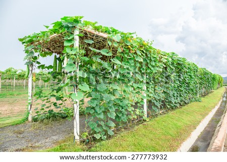 Gourd arbor in cloudy day - stock photo