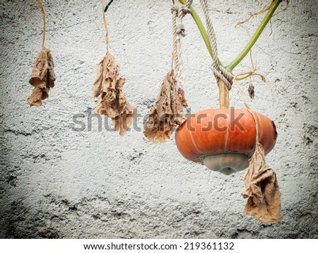 Gourd hanging still on a stem with dry leaves in front of grunge background - stock photo