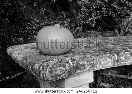 Gourd on a lichen-covered stone bench with cotoneaster berries - monochrome processing - stock photo