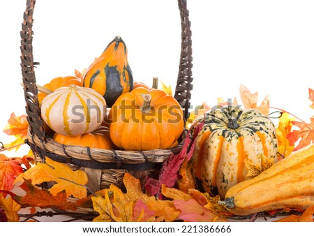 Gourds and squash with a basket and autumn leaves on a white background - stock photo