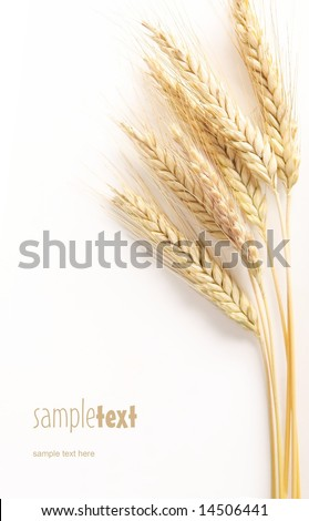 Grain and easy to remove the text - stock photo
