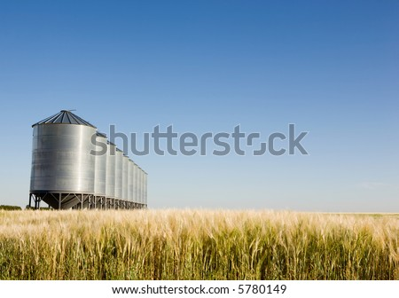 Grain bins in the distance with a wheat field in the foreground.  Shallow depth of field is used to bring attention to the grain bins. - stock photo