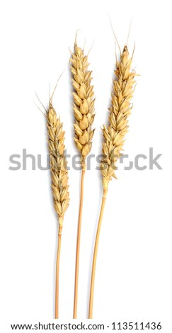 Grain ears isolated over white background - stock photo