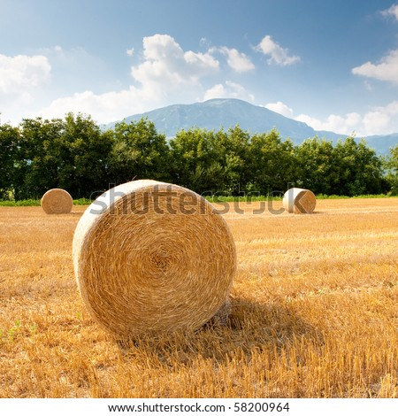 Grain field after harvest - stock photo