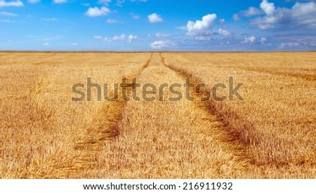 grain field with tractor tracks - stock photo