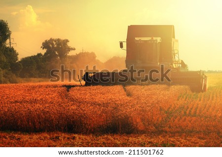 grain harvester combine on wheat field and sun light - stock photo
