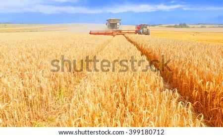Grain harvesting combine - stock photo