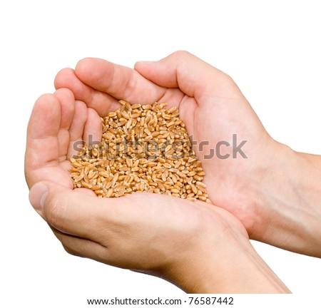 grain in hand - stock photo