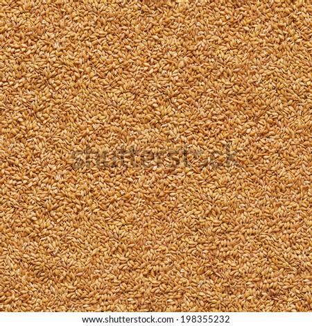 grain of wheat background - stock photo