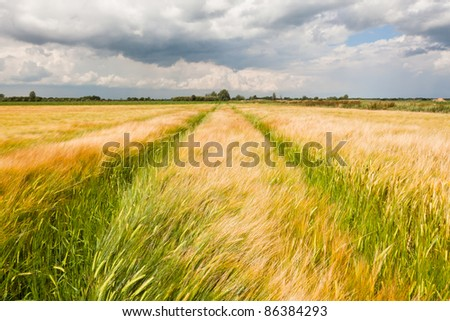 Grainfield - stock photo