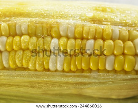 Grains of Ripe Corn with Water Droplets - stock photo