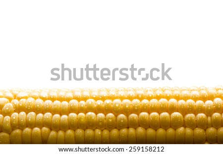 Grains of ripe corn with water drops background with copy space - stock photo