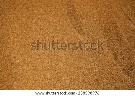 Grains of wheat in heaps during harvesting. - stock photo