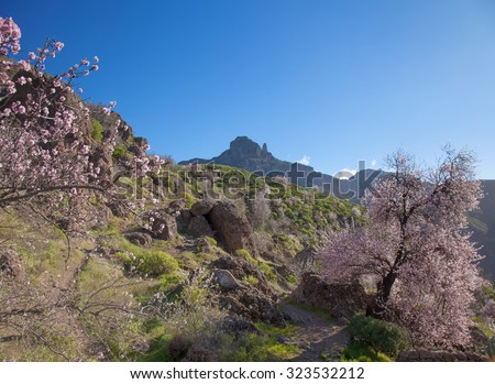 Gran Canaria, Caldera de Tejeda in February, almond trees in full bloom, time of almond-blossom festival - stock photo