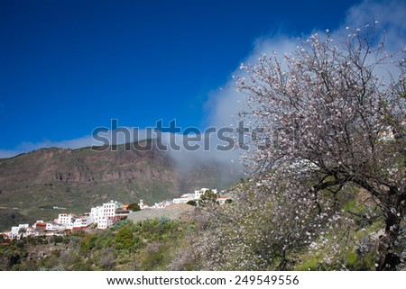 Gran Canaria, Caldera de Tejeda in winter, almond trees in full bloom, clouds cascading from the walls of the Caldera - stock photo