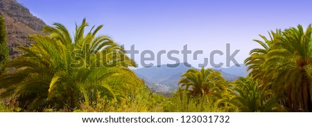 Gran Canaria Canary Palm tree mountains Phoenix canariensis