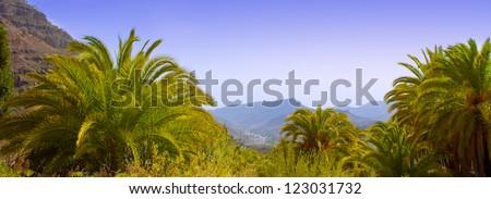 Gran Canaria Canary Palm tree mountains Phoenix canariensis - stock photo