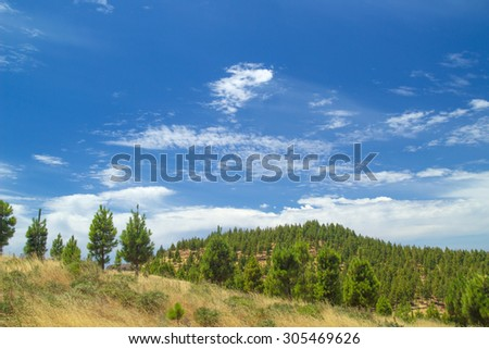 Gran Canaria, route Cruz de Tejeda - Artenara, canarian pine trees on Montana de  Artenara - stock photo