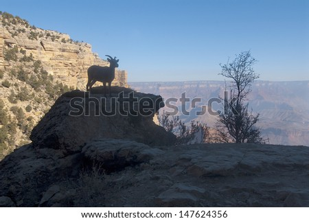 Grand Canyon National Park, AZ one of the wonders of the world as seen from the south rim/ Grand Canyon/The big horn sheep frequent the south rim  in the spring because it's cooler than below. - stock photo