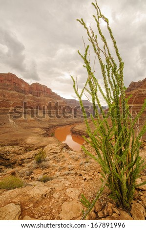 Grand Canyon National Park, Nevada near las vegas - stock photo
