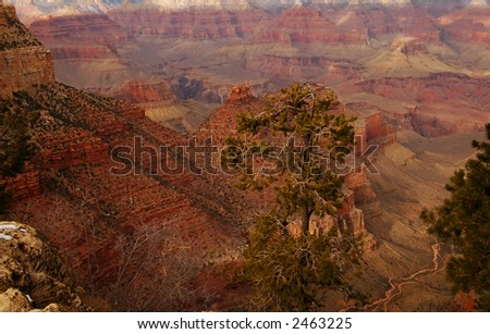 Grand Canyon National Park with trees in foreground
