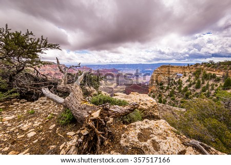 Grand Canyon, North Rim, Cape Royal trail - stock photo