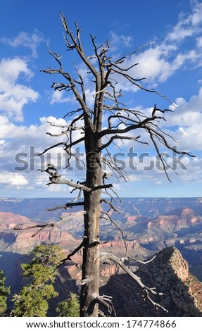 Grand Canyon with blue sky 16 - stock photo