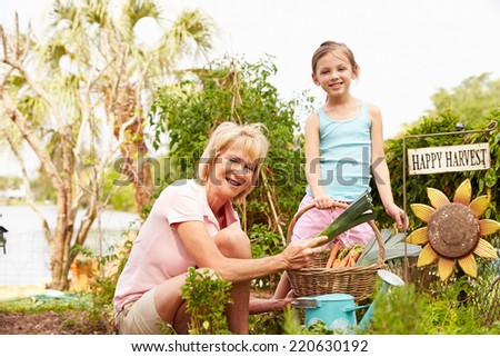 Grandmother And Granddaughter Working On Allotment - stock photo