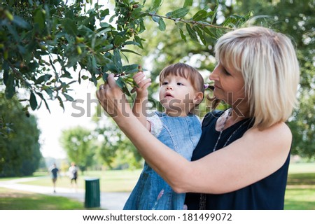 Grandmother and her granddaughter are looking acorn branch. - stock photo
