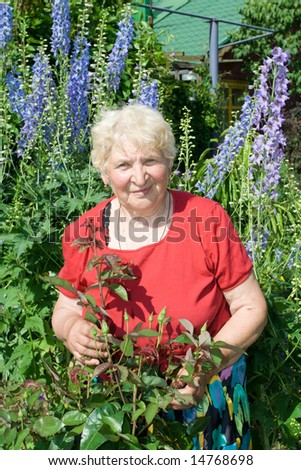 Grandmother watching bush of rose in the garden