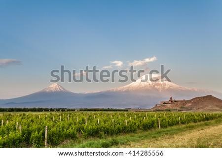 Grape field in Ararat valley. View of Khor Virap and Mount Ararat. Exploring Armenia - stock photo