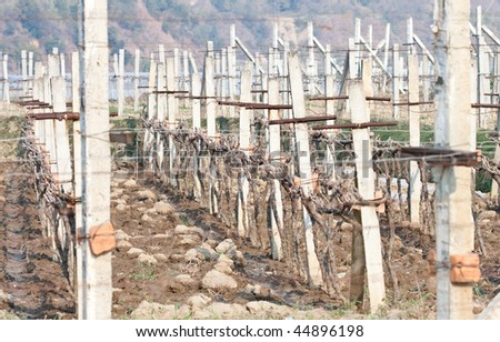 Grape field in the sichuan - stock photo