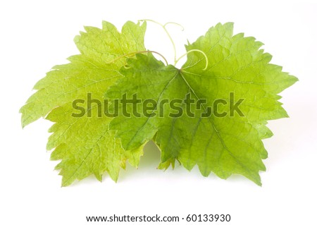grape leaf isolated on white - stock photo