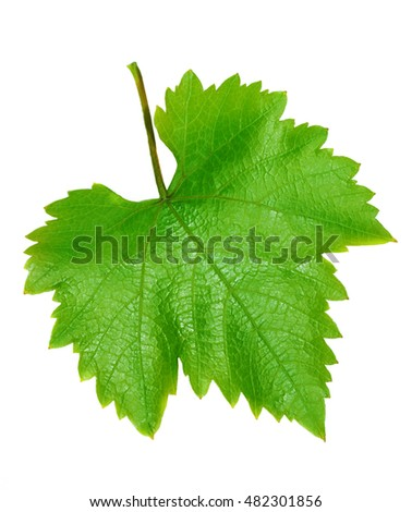 Grape leave isolated on white background